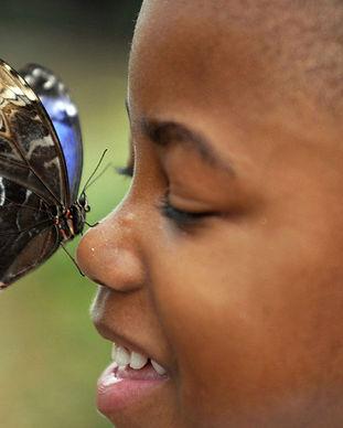 little-boy.butterfly.jpg