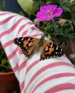 workshop.butterflies.jpg