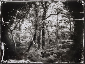 forest, sagami-ko.jpg