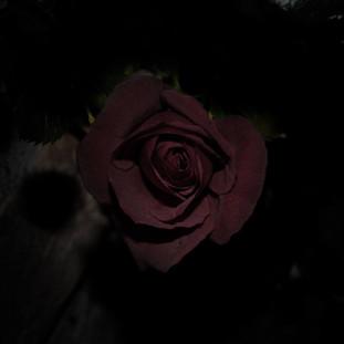 Dark Theme Photographs, photo #2