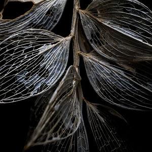 Dark-theme-photographs-1.jpg