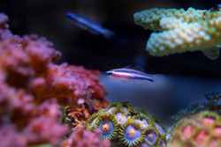 fish-2706703_1920