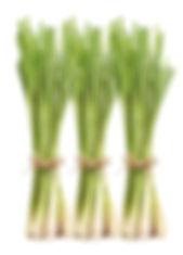 LEMON-GRASS.jpg