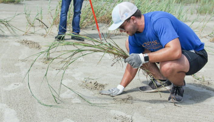 McNeese student planting Bitter panicum on Holly Beach (9.28.19)