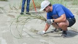 McNeese student planting Bitter panicum on Holly Beach (9.28.19)