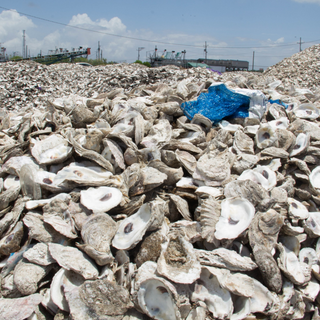 Oyster Shell Recycling Program