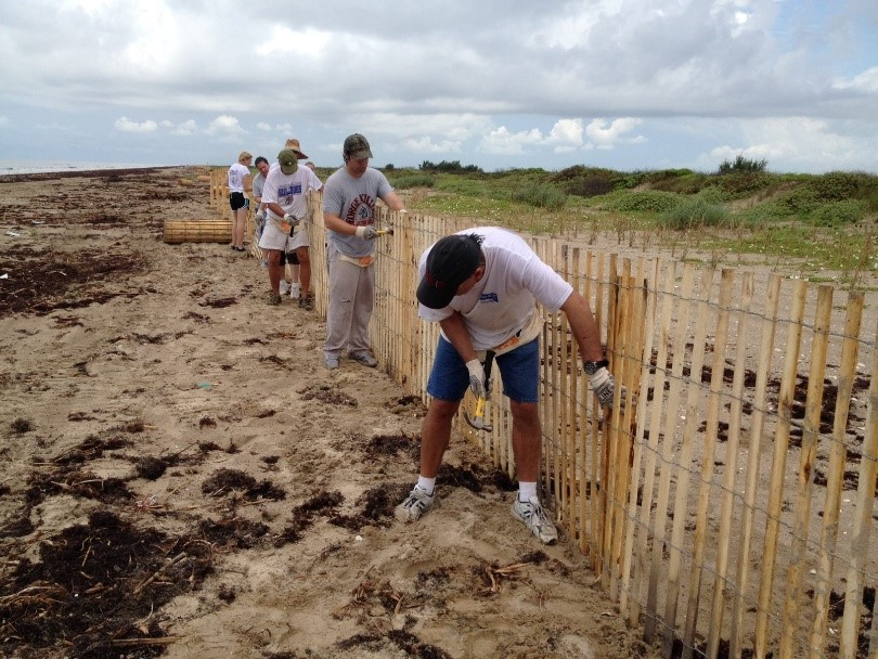 Volunteers installing sand fence along t