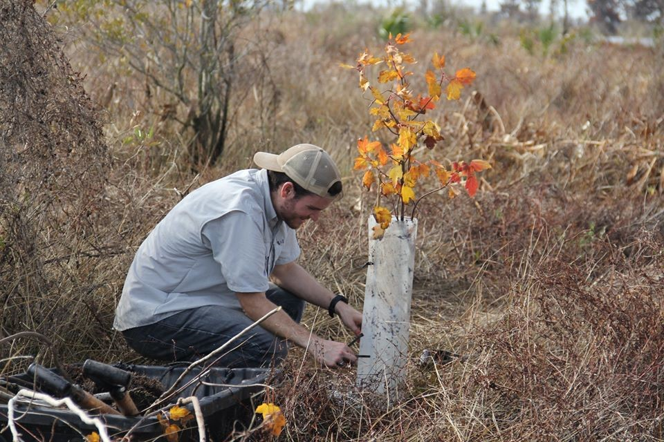 LPBF volunteer planting a Red Swamp Mapl