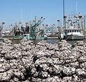 Oysters_1-300x200.jpg