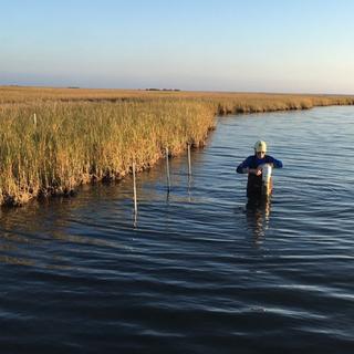 Coastal Monitoring & Adaptive Management