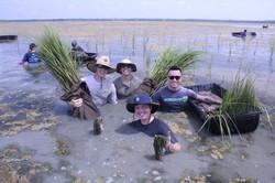 US Coast Guard volunteers planting Spart
