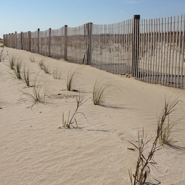 CRCL's Sand Fence Installation