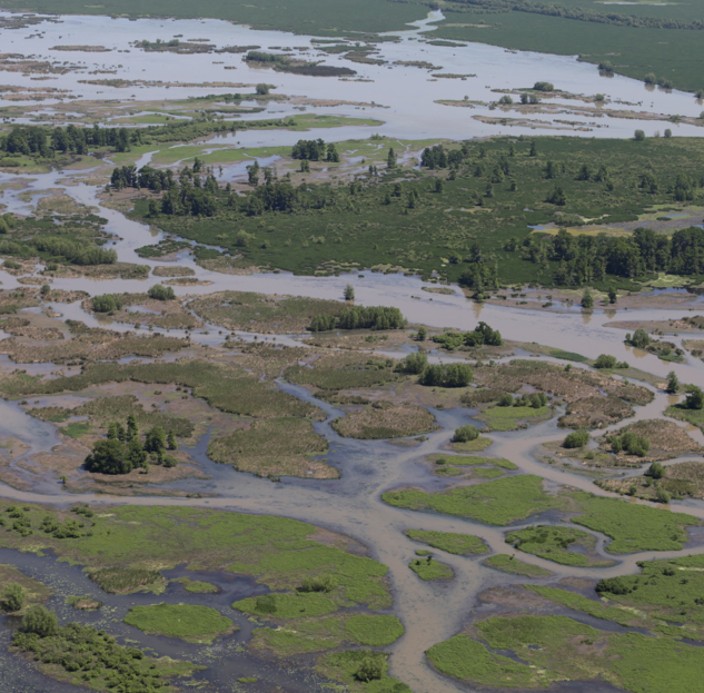 Coastal Louisiana Wetlands