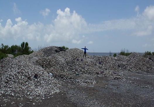 Cropped Shell Pile (1).jpg