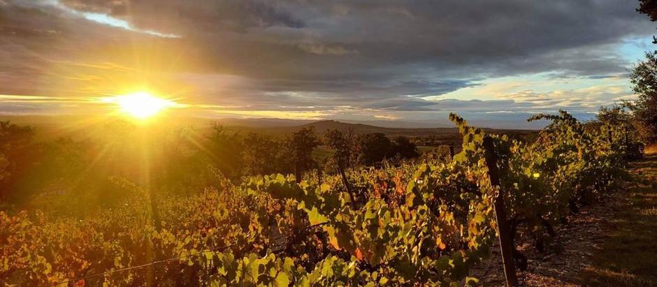 Destination Loire-Forez (42) pour les amoureux du vin