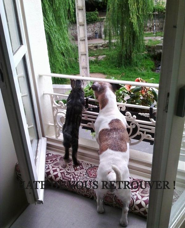 Chien et chat pendant le confinement - Une Odeur de Tilleul, chambre d'hotes a Montbrison