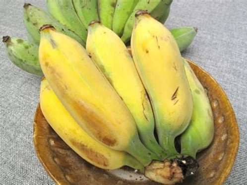 Banana Gold Finger/Ice Cream