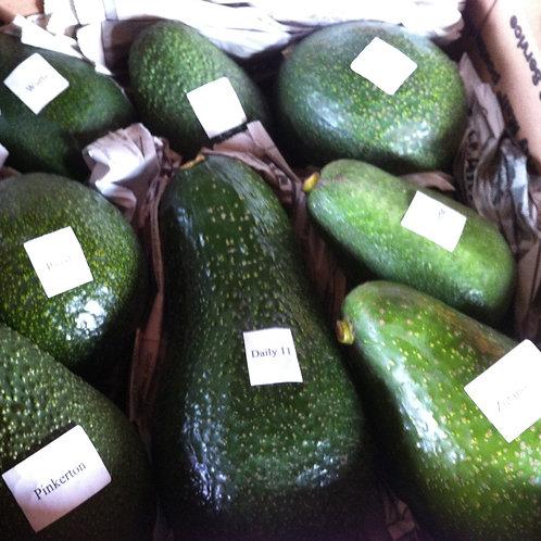 Avocado - Special  Fruit Varieties:Sharwil/Gem/Nabal/Reed