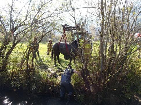 Pferd aus Sumpf gerettet!