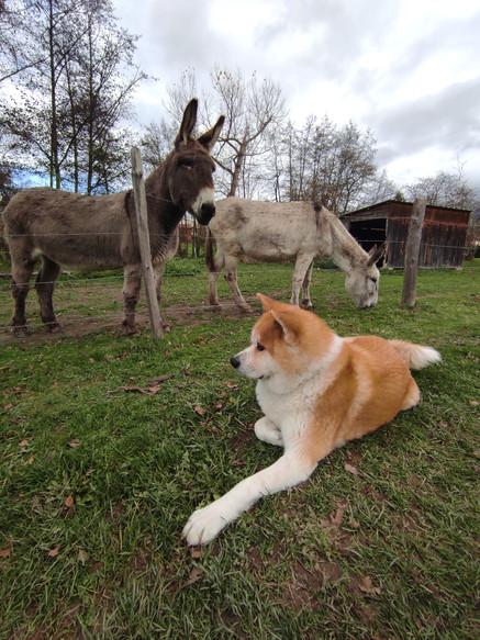 Kaiwa et ses copains
