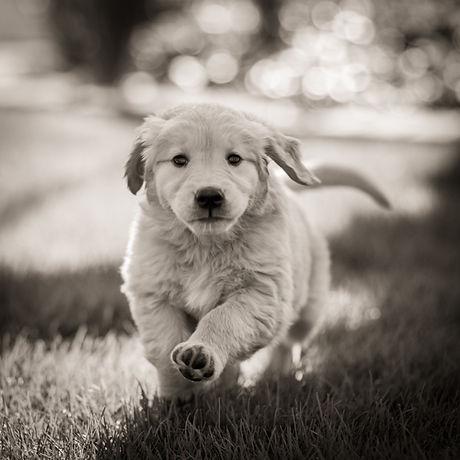 Morgan Puppy.jpg