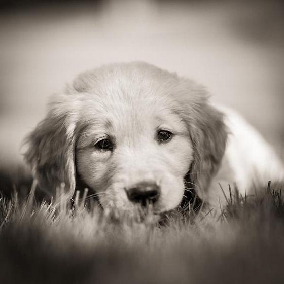 Morgan Puppy 2.jpg