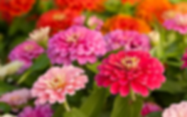 flowerfield2.webp
