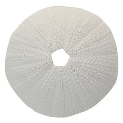 COAST TO COAST - Sea Urchin (white)