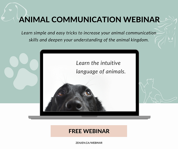 Animal communication (2).png