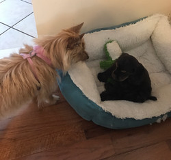 Ginger Snap and Savannah
