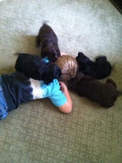 Logan came to visit the puppies