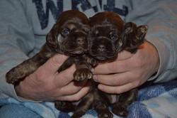 Breeze and Travis puppies