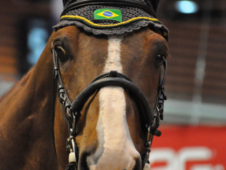 Equita Lyon, le cheval taille patron