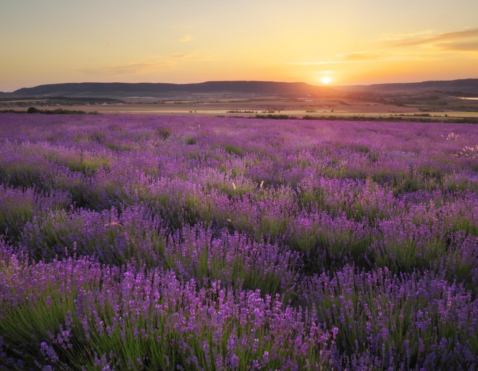 Monthly Masterclasses #2 -  Lavender Arc