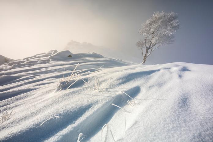 Frozen tree.jpg