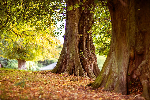 old-tree.jpg