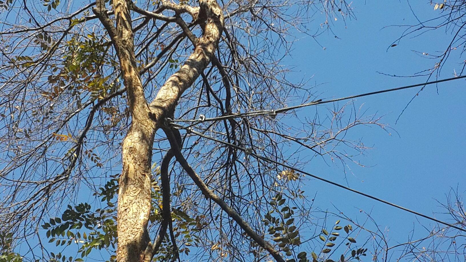 Tree strengthening