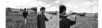 fazendeiro-trackeando-bois1.jpg