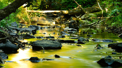 Cedar Mill Falls.jpg
