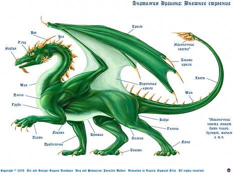 Анатомия дракона: части тела