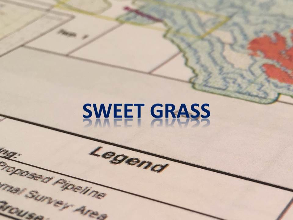 Sweet Grass NEW