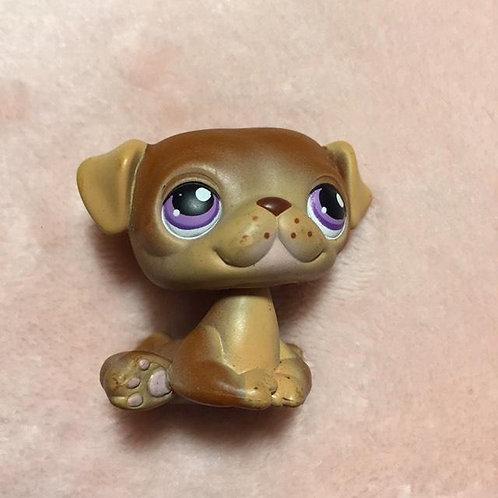 LPS Authentic Pug