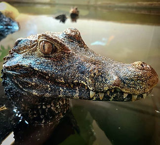 Second Chance Touring & Residential Park Cotswolds - Crocodiles Of The World Image