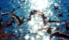 _DSC0125 edited.jpg