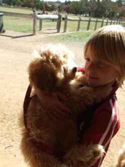 toy_puppies_designer_dogs_17.jpg