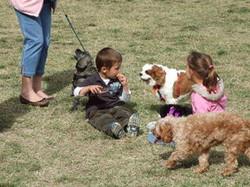 toy_puppies_designer_dogs_18.jpg