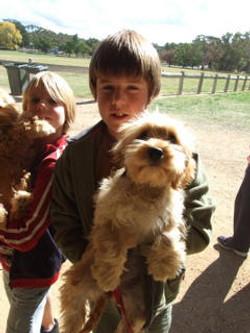toy_puppies_designer_dogs_07.jpg