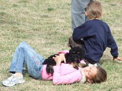 toy_puppies_designer_dogs_13.jpg