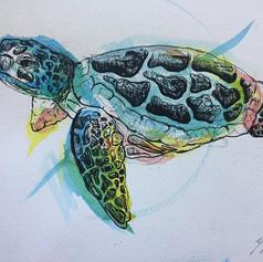 Watercolour Turtle. 9 x 12