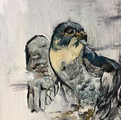 Falcon study (SOLD)